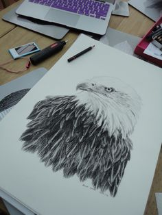 Charcoal drawing of a Bald Eagle by Emma Gorton. From Bella&Bryn