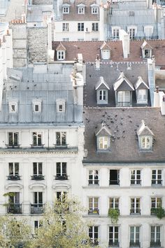 Paris Photography Birds on a Rooftop in Paris от GeorgiannaLane