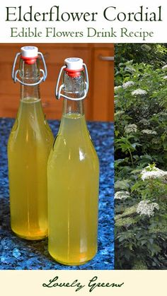 Elderflower Cordial recipe - bottle up the gorgeous aroma of wild Elderflowers to use in summery drinks and desserts. Easy to make and absolutely delicious!