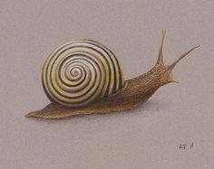 Snail by Lars Furtwaengler   Colored Pencil / Pastel Pencil   2011