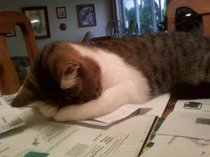 Cat Attempts to Do Own Taxes, Fails When Artemis...