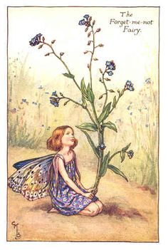I love poppies, and roses, and camellias, but if I were going to be any of Cecily May Barker's flower fairies, it would be this one.
