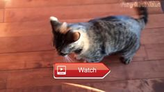 Funny Cats And Dogs Part Funny Cats vs Dogs Funny Animals Compilation    on Pet Lovers