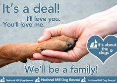 There are millions of dogs out there waiting for a home. Adopt, Don't Shop. #NMDR #rescue