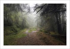 https://flic.kr/p/A6F2AS | MYSTERIOUS WAYS | Thrunton Woods, Northumberland. Had a week in Alnwick, Northumberland at the start of October. Mostly it rained or was foggy, sometimes both together. This is in Thrunton Woods whilst it was raining and foggy. More on my blog  Blog