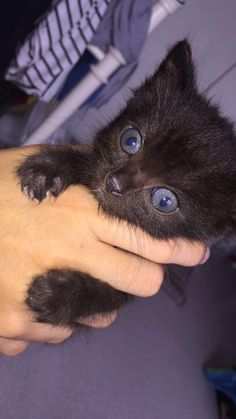 Looks like Diddy! Cute Baby Animals, Animals And Pets, Cute Black Cats, Cat Photography, Kawaii, Beautiful Cats, Cat Memes, Cool Cats, Cats And Kittens