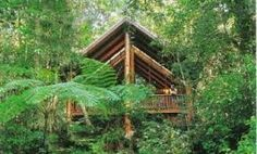 treehouses maleny - Google Search