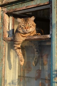 Country Tabby Cat Resting on a Window at Sunset.