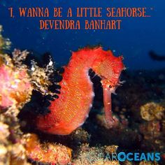 Who wouldn't want to be a little #seahorse.