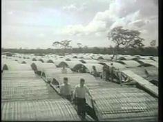 Brasília em construção. Notícias e política - CPDOC- 1958