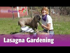 'Lasagna Gardening': Here's How To Grow Organic Vegetables Easily (Even Without A Garden!) | True Activist