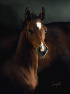 Such beautiful creatures horses are! All The Pretty Horses, Beautiful Horses, Animals Beautiful, Cute Animals, Simply Beautiful, Beautiful Babies, Baby Animals, Beautiful Things, Beautiful Pictures