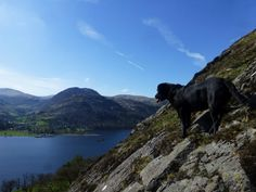 Morgan Above Ullswater Penrith, Summer Special, Lake District, More Pictures, Labrador, England, Cottage, Spaces, Mountains
