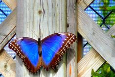 greatest butterflies collection