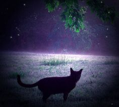 The Black Cat Disappeared Into A Night Of Mist And Fog