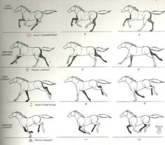 heres a work in progress of the horse run cycle I am currently working on. heres the reference I am using its from the richard williams b...
