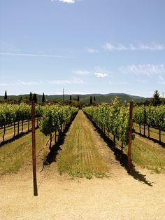 Vineyards of Napa by Pamplemousse Blog, via Flickr