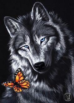 Wolf painting with butterfly. Anime Wolf, Wolf Photos, Wolf Pictures, Wolf Wallpaper, Animal Wallpaper, Black Wallpaper, Wolf Movie, Wolf Craft, Alpha Wolf