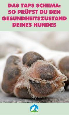 Das TAPS Schema beim Hund: so prüfst Du den Gesundheitszustand Deines Hundes! Jetzt im Haustier Notfallkarte Hunde Blog! #hunde #wissen