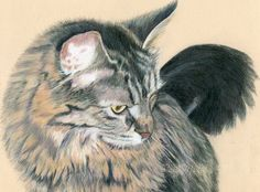 My colored pencil drawing/painting of my Maine Coon!