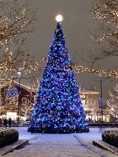 Blue lights....aka A T1D Tree! #diabetes #awareness