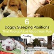 Doggy-Sleeping-Positions-Pinterest-image Dog Sleeping Positions, Sleeping Dogs, Creative Writing Degree, Relaxed Dog, Stages Of Sleep, Different Dogs, Body Heat, Dog Care, Puppy Care