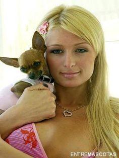 Paris hilton con su perro Tinkerbell.