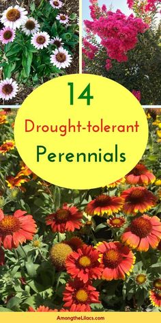 These 14 perennials are low-maintenance and can withstand periods of drought! Th… These 14 perennials are low-maintenance and can withstand periods of drought! This makes them incredibly easy to care for, plus they're also full of color and texture, too. Perennials Fabric, Shade Perennials, Flowers Perennials, Yellow Perennials, Long Blooming Perennials, Best Perennials, Low Maintenance Landscaping, Low Maintenance Plants, Garden Care