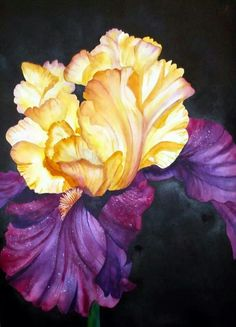 Watercolor flowers iris purple yellow