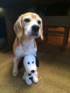 Beagle with Snoopy..