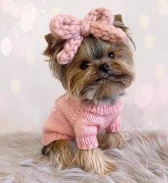 Morkie Puppies, Yorkie Puppy For Sale, Yorkie Dogs, Cute Dogs And Puppies, Baby Puppies, Baby Dogs, Pet Dogs, Doggies, Pets
