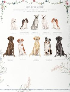 Muddy Paws- Dog Lover Graphics by Twigs and Twine on King Charles Spaniel, Cavalier King Charles, Education Canine, Different Dogs, Dog Illustration, Floral Illustrations, Freelance Illustrator, Dog Portraits, Westies