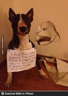 Sounds about right for a bull terrier. Incidentally, I think that bull terrier is my son's spirit animal. Cute Funny Animals, Funny Animal Pictures, Funny Cute, Funny Dogs, Silly Dogs, That's Hilarious, Animal Pics, Dog Pictures, I Love Dogs