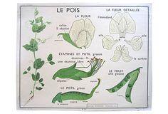 One Kings Lane - French Botanical School Poster