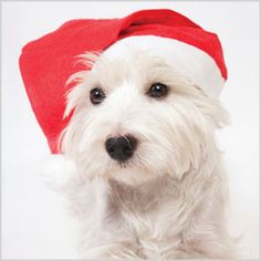 Attention all pet parents! There are places you can get your pet's picture taken with Santa.