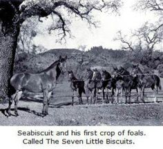 Seabiscuit - cutest thing I've ever seen