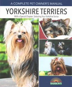 If you think that Yorkies are delicate, retiring, and shyathink again. The…