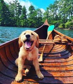 Golden retriever pup AND a cedar canoe? Sign me up! Golden retriever pup AND a cedar canoe? Sign me up! Animals And Pets, Baby Animals, Funny Animals, Cute Animals, Animal Memes, Animal Pictures, Cute Puppies, Cute Dogs, Dogs And Puppies