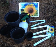 Growing a Sunflower and a class full of little readers! Reading Games, Reading Activities, Teaching Reading, Learning, Reading At Home, Early Reading, Phonics Activities, Circle Of Life, Eyfs