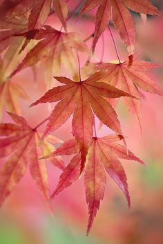 Subtle Changes (by Jacky Parker Floral Art) small details of the changing seasons Flor Tattoo, Tree Leaves, Pink Leaves, Tree Tree, Colored Leaves, Jolie Photo, Autumn Photography, Flower Photography, Natural Forms