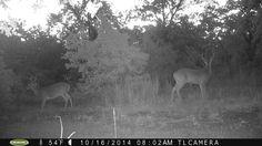 Big Bucks! www.laurenboehmlynch.com