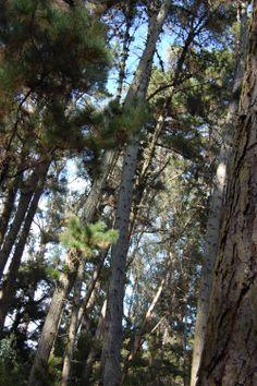 bosques del maule  reserva forestal Federico Albert . Chanco  Región del Maule