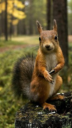 The most photogenic squirrel
