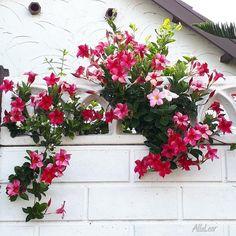 Decoration, Floral Wreath, Wreaths, Plants, Gardening, Gardens, Balcony Ideas, Decor, Floral Crown