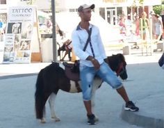 Stop the severe mistreatment of donkeys in Mamaia seaside resort, Romania!