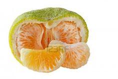 Ugli fruit citrus  http://us.123rf.com/400wm/400/400/dole/dole1104/dole110400046/9398723-jamaican-tangelo-ugli-ugly-fruit-hybrid-of-orange-grapefruit-and-tangerine.jpg