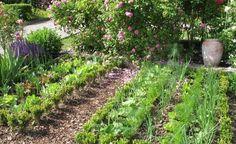 Mischkultur im Gemüsebeet - Wenn Sie durch eine Mischkultur für Abwechslung im Gemüsebeet sorgen, entwickeln sich alle Pflanzen prächtig und schützen sich sogar gegenseitig vor Schädlingen.