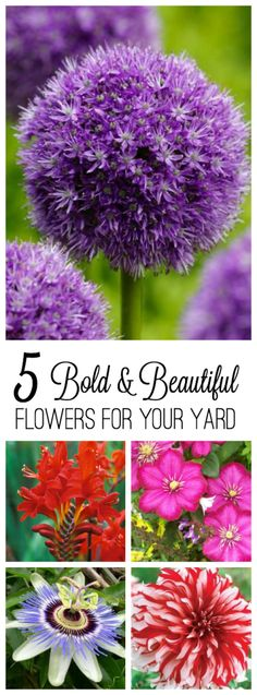 5 bold and beautiful flowers for your yard