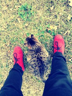 le mie passioni, le scarpe e i gatti =) #woman #shoes #cat