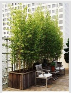 Potted bamboo plants for privacy on the deck.